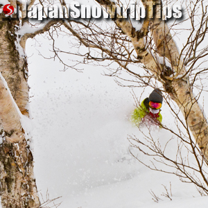 JapanSnowtripTips-thumb-cheap-tree-snowboarding-skiing-japan-001